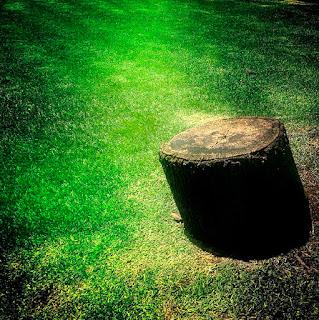 """Cuando una persona de mentalidad """"moderna"""" encuentra un jardín lleno de vida piensa que está descuidado y sale corriendo a buscar la cortadora de césped o el herbicida para arrasar con todas las plantas y así """"limpiarlo""""."""