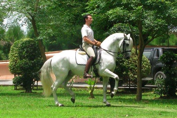 Resultado de imagem para mario miguel silva equitação jacarta