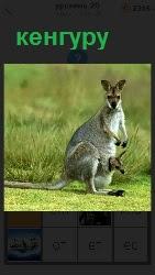 460 слов стоит кенгуру у которой в сумке детеныш 20 уровень
