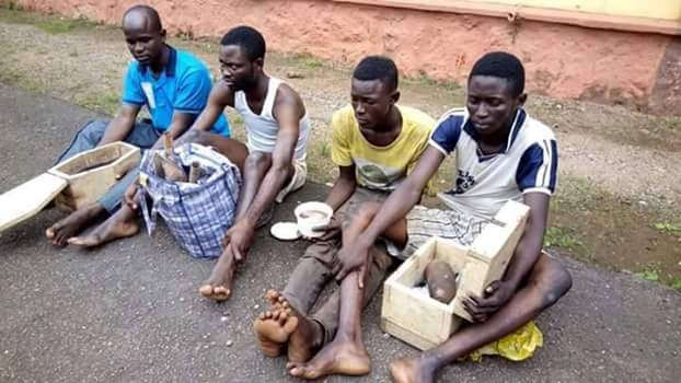 4 Ritualists Arrested In Ijebu Igbo, Ogun With Human Heart