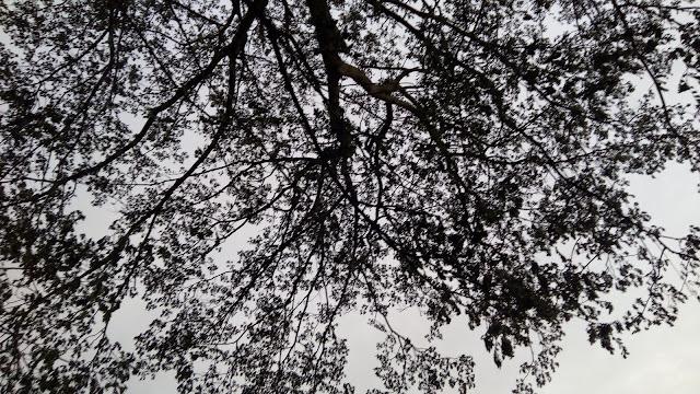 jungle photography hd