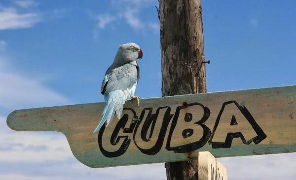 Картинки по запросу фото Куба