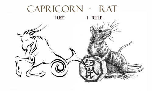 Capricorn Rat Personality Traits | Capricorn Life