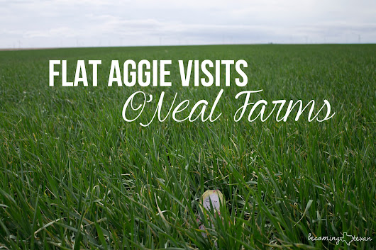 Flat Aggie Visits O'Neal Farms