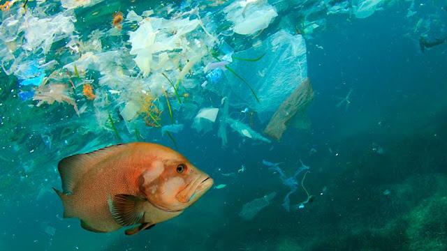 Las razones por las que los animales no pueden dejar de comer plástico