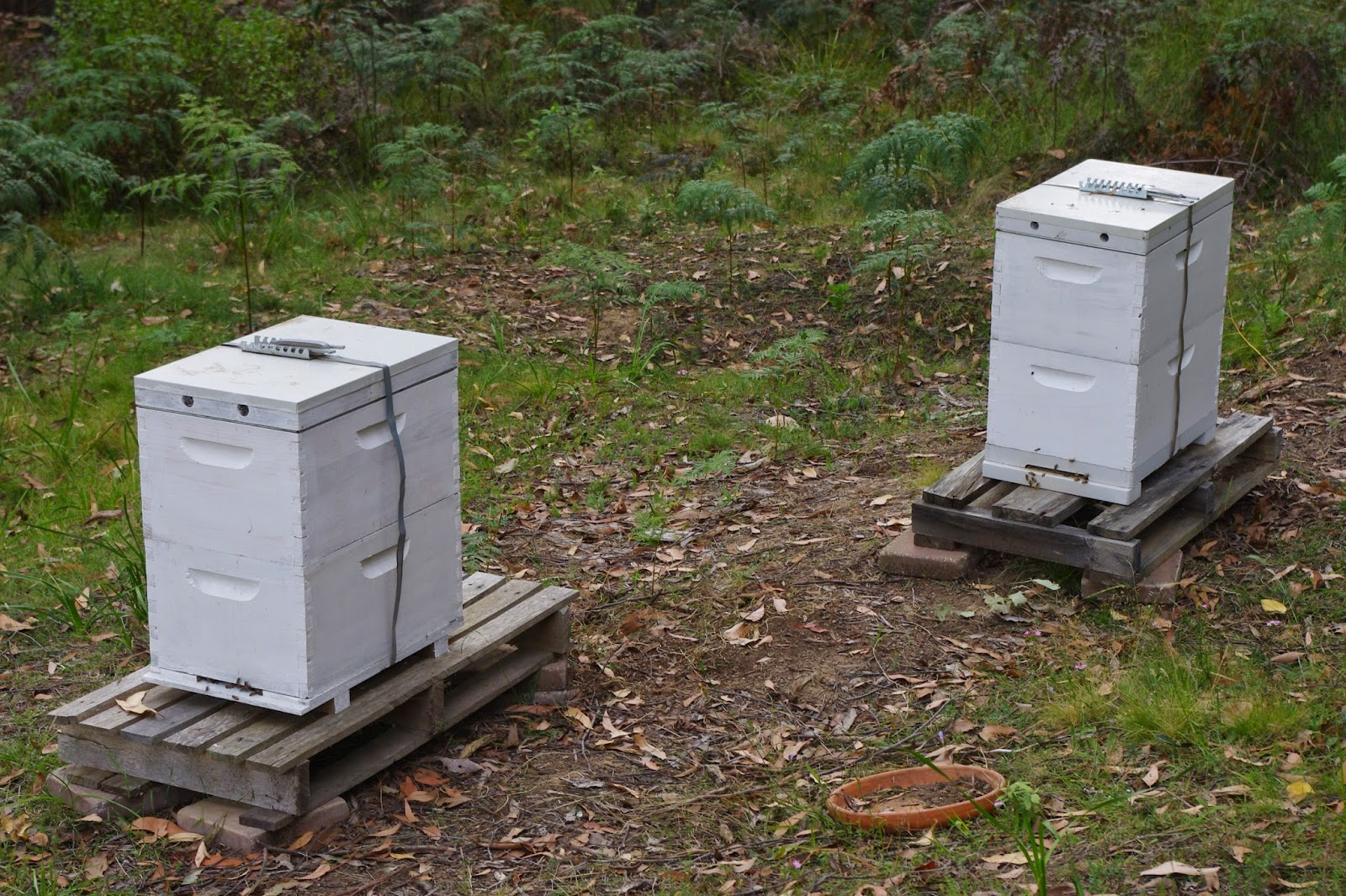 New beehives at the farm
