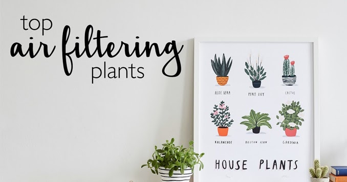 Ethical living top air filtering plants for your home for Air filtering plants