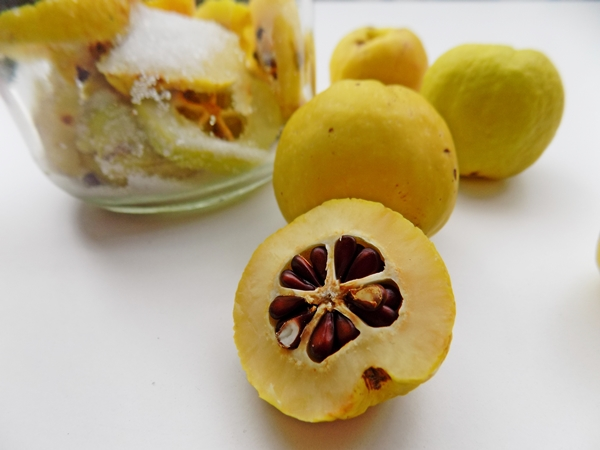 Natomiast z owoców pigwy można zrobić dżem, nalewkę konfiturę lub kompot. Wspaniała jest również jako syrop do herbaty (drobno pokroić razem z pestkami, zasypać cukrem i odstawić na parę dni do lodówki).