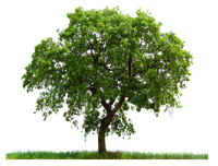 Árvore em png