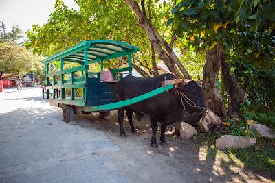 Ochsenkarre auf La Digue