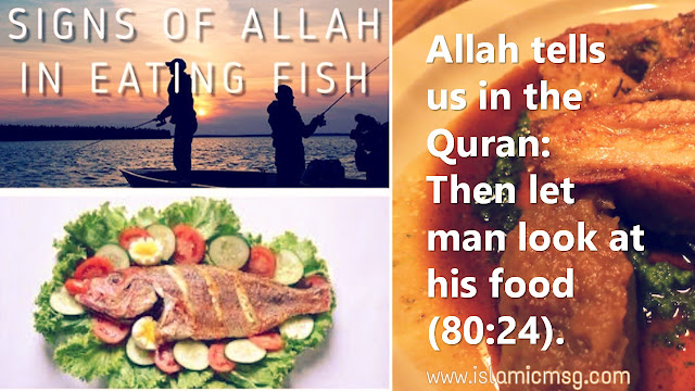 food-quran-fish