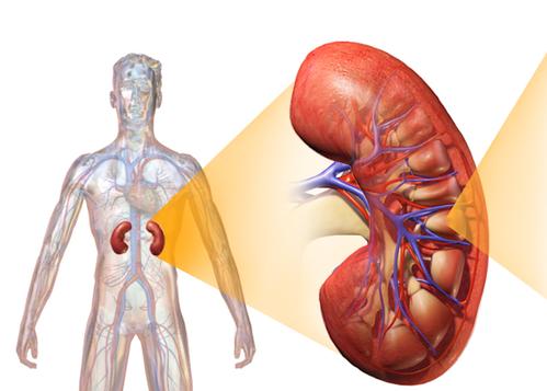 tratamiento de la neuropatía diabética diabetes