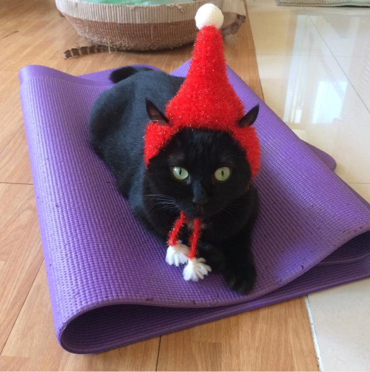 聖誕貓咪帽試做文_《世界上最可愛的貓咪毛線帽》