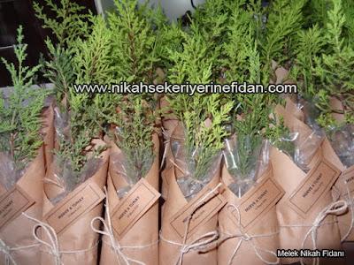 Antalya Nikah Çamı Fidanı - Merve Tunay - 2