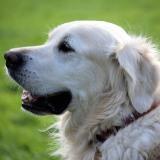 Agresividad de los perros según su raza