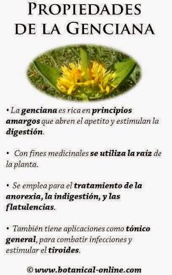 fichas de plantas medicinales del bosque mediterráneo