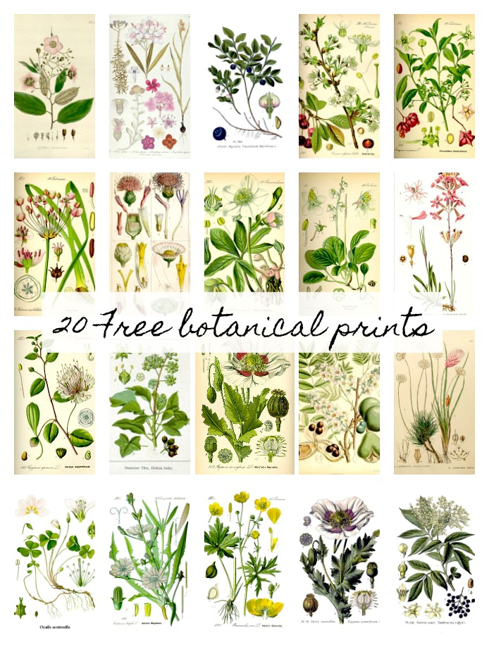 20 free botanical wall printables