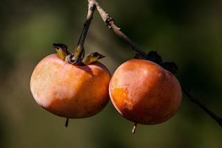 Buah kesemek yang berasal dari Genus Diospyros ini merupakan buah yang berasal dari Asia  Inilah 17 Manfaat Buah Kesemek Bagi Kesehatan