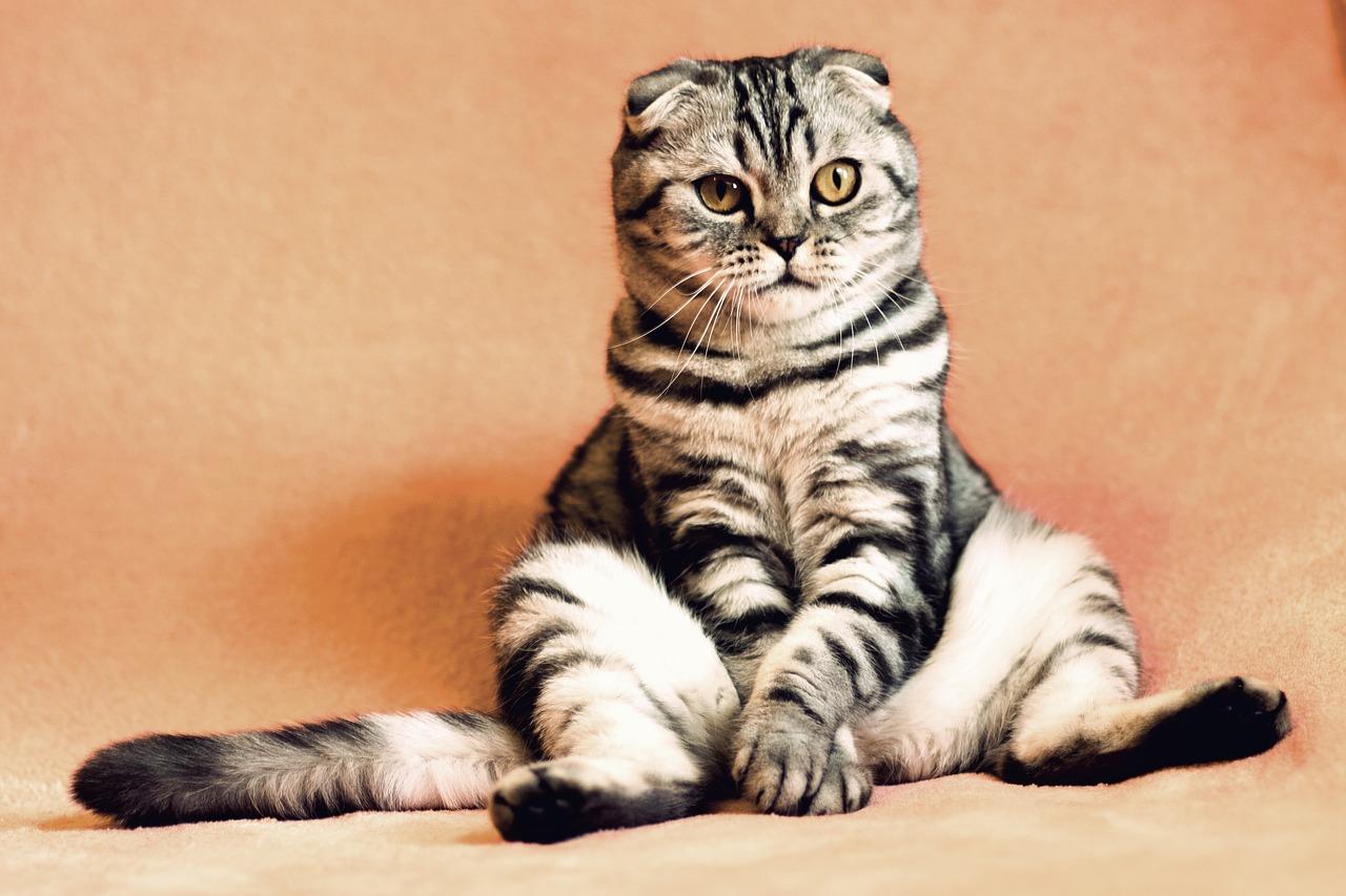 Gambar kucing lucu duduk