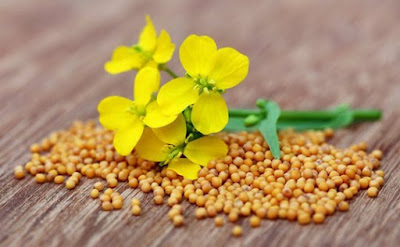 Agri commodity calls, Agri Commodity Tips, Agri futures Tips, Chana Tips, Free  Commodity Tips, Free Agri Tips, Jeera Tips, MCX Tips Services, Mustard oil tips
