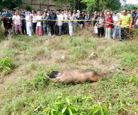 Warga menyaksikan penemuan mayat laki-laki tak dikenal di Pulau Rakat Asahan.