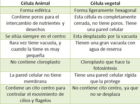 Resultado de imagen de ejercicios celula animal y vegetal