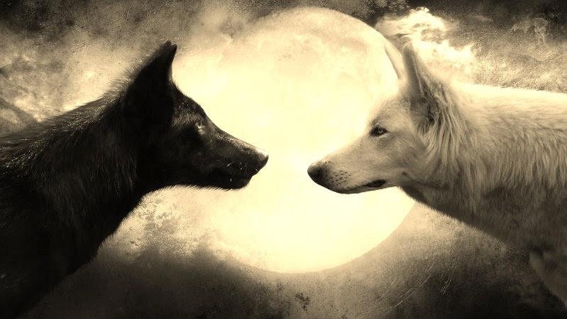 два волка и луна