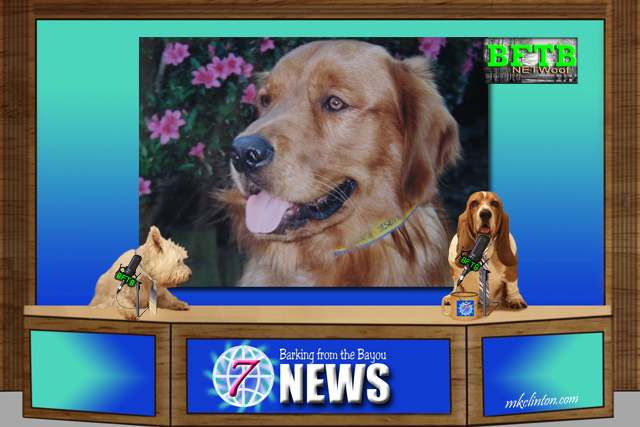 Two dogs reporting the news