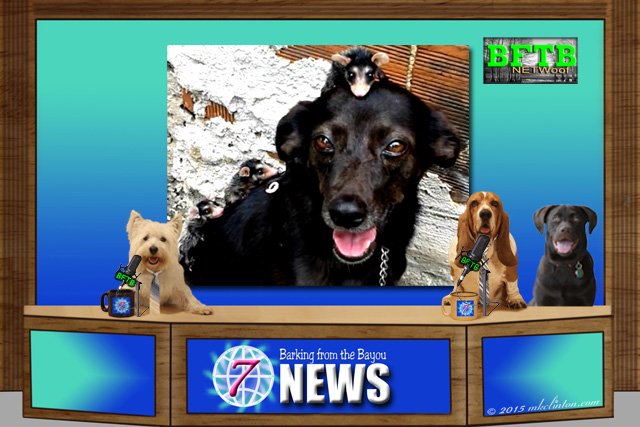 BFTB NETWoof dog news with 3 dogs and a photo of dog with possums