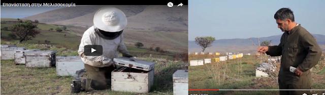 Χαλάει ο κόσμος!!! Ξεχάστε ότι ξέρατε για την μελισσοκομία...Αλλάζουν όλα VIDEO