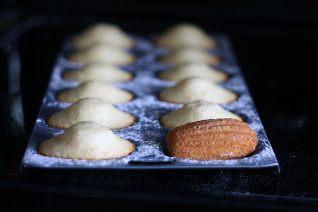 A tray of recently baked madeleines with the closest madeleine flipped over showing the browned shell side.