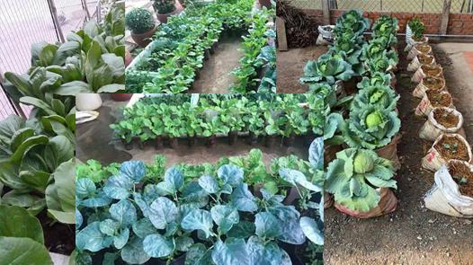 Cara Menanam Sayuran Organik Di Pekarangan Rumah