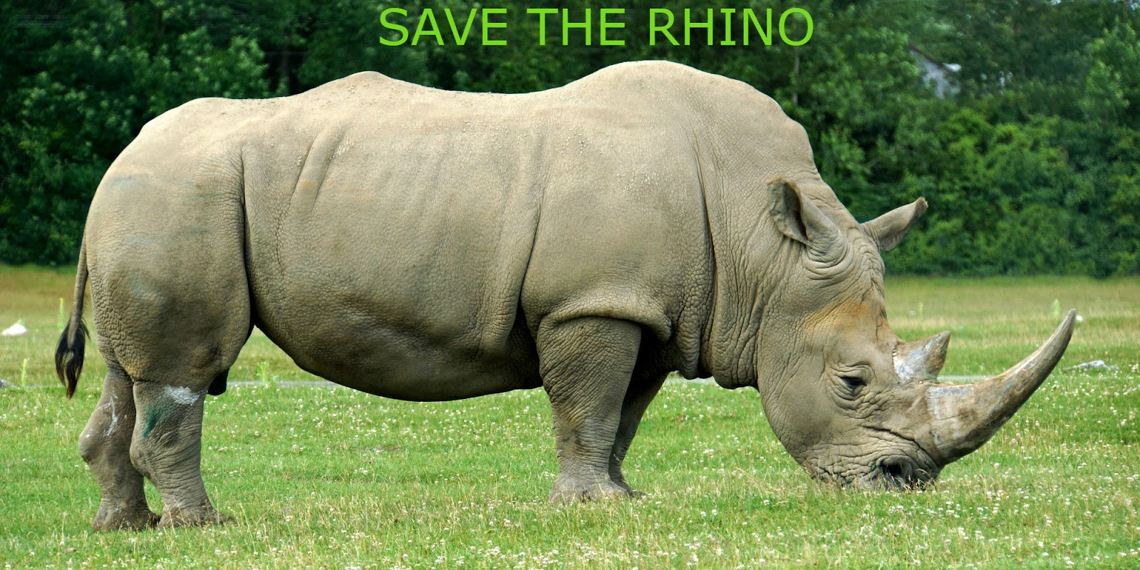Love Creature and Save Nature: Rhinoceroses facts