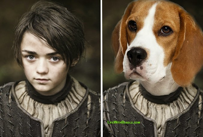 If Game of Thrones characters were dogs