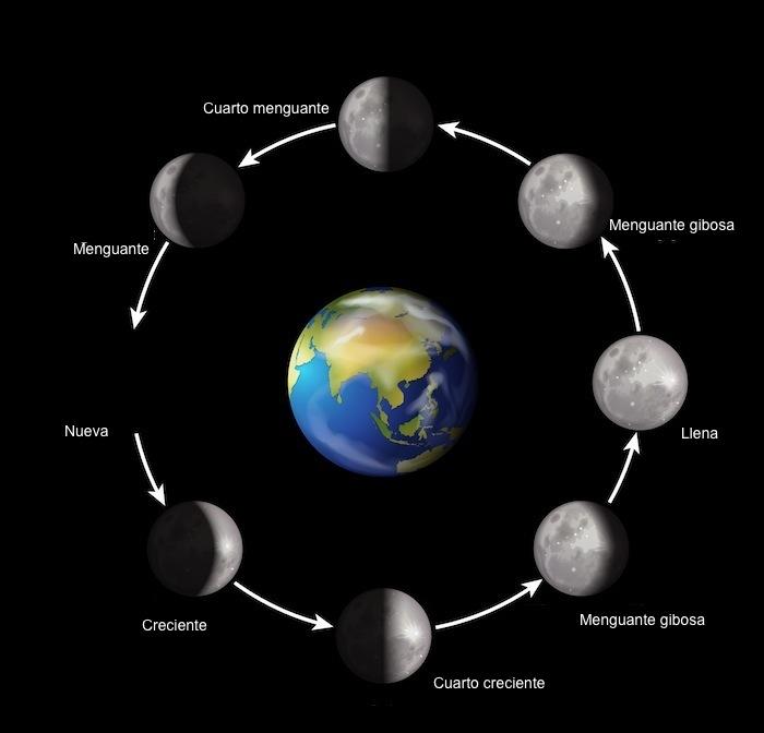 VISIÓN AGROECOLÓGICA: Fases lunares más adecuadas para cada ...