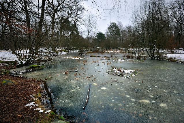 """""""La Mare aux Fées"""" Forêt de Fontainebleau"""