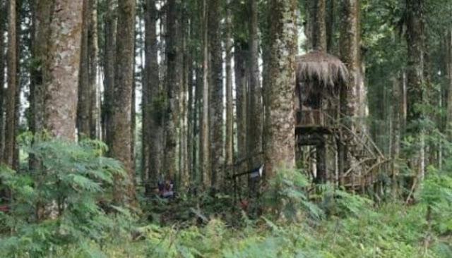 Rumah Pohon Kampung Kurcaci