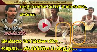Karnataka man survives 12 Snake bites !