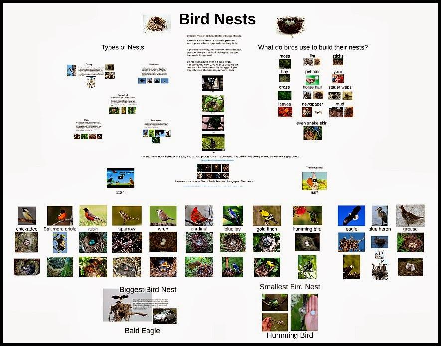 http://www.teacherspayteachers.com/Product/Bird-Nest-Prezi-1172522