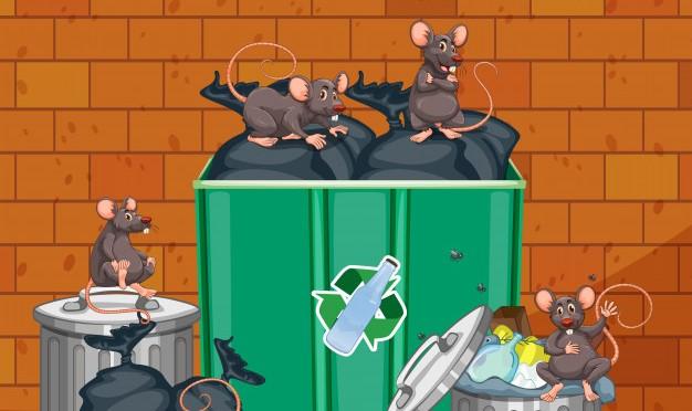 Cara Agar Tikus Tidak Mau Masuk Rumah Kita