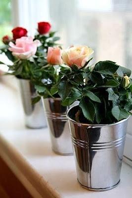 КАК ВЫРАСТИТЬ РОЗУ ИЗ СРЕЗАННОГО ЦВЕТКА  Многие, кому дарили букет из роз, замечали, что через несколько дней на стеблях появлялись свежие побеги. Конечно, первая мысль - дать новую жизнь растению, вырастив из него новый цветок. Если вы решили вырастить розу из срезанного цветка, соблюдайте некоторые правила.    1. Дождитесь увядания букета (не полного). Из стеблей нарежьте черенки так. чтобы на каждом было не меньше 3-х почек. То есть каждый фрагмент побега должен иметь 2 междоузлия.  2. Острым лезвием от бритвы или ножом сделайте небольшой косой срез прямо под почкой и прямой срез на 0,5 см выше почки. Если есть листья, нижний удалите совсем, верхний - наполовину.  3. Возьмите препарат для улучшения укоренения растений (например Корневин или Гетероауксин, они есть в свободной продаже в цветочных магазинах), разведите согласно инструкции и поместите черенки в раствор на 12-14 часов.  4. Приготовьте горшок с питательной и рыхлой землей (можно купить готовый грунт для роз в магазине). Посадите черенки наклонно, проследив, чтобы средняя почка оказалась над землей, чуть выше поверхности. Землю вокруг черенка слегка примните пальцами.  5. Разрежьте пластиковую бутылку с отвинченной крышкой пополам примерно по центру. Верхней частью накройте черенки. Оптимальная температура воздуха для ваших посадок +25°С.  6. Опрыскивайте ваши посадки 5-6 раз в день отстоянной водой комнатной температуры (или даже чуть теплее). Время от времени можно опрыскивать слабым раствором препаратов Циркон или Эпин. Земля в горшке должна быть все время влажной, но не киселистой.  2. Как вырастить черенки розы в картофелине   Приступаем к процессу. Роем траншею на открытом хорошо освещенном грунт в защищенном от ветра месте и засыпаем песок. Летом, в самый разгар цветения, у роз появляются хорошие молодые побеги, которые немного наклонно отрезаем секатором. Желательно выбирать побеги толщиной с карандаш, которые более стойко будут размножиться. Побеги должны быть прямые, без изгибов. Нарезаем их н