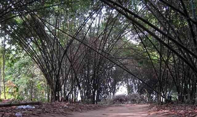 সুন্দরগঞ্জে বাঁশঝাড় থেকে লাশ উদ্ধার