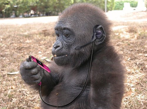 monkey oral sex xxx