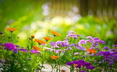 taman bunga bogor,taman bunga cibubur,taman bunga mawar,rute taman bunga nusantara,lokasi taman bunga nusantara,tiket masuk taman bunga,taman bunga sakura,alamat taman bunga,