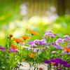 Taman Bunga Tempat Berlibur Akhir Pekan