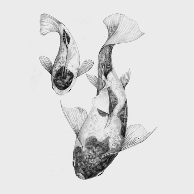 02-Koi-Fish-Chris-R-Detailed-Drawings-Involving-Animals-www-designstack-co