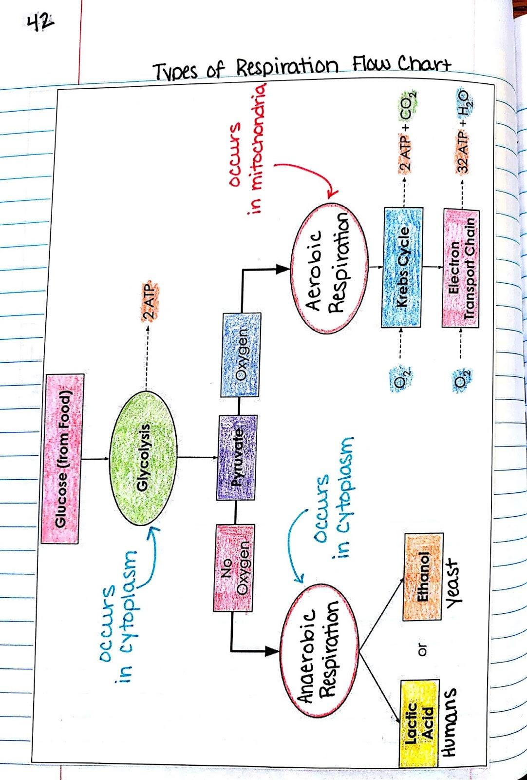 I Teach Science And Sample Inb Unit For Biology