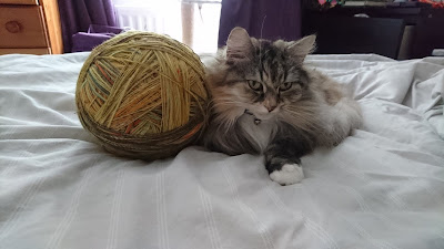 fluffy longhair calico cat with huge ball of yarn