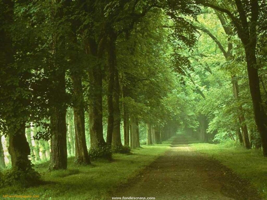 green nature background hd - photo #11