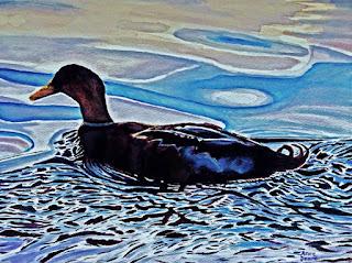 watercolor of mallard duck swimming at Wapato Lake, Tacoma, WA, won 1st place in a juried art show at Tahoma Center Gallery, 2018, copyright Anne Doane 2018